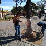 Remoza la 2 de Octubre Plaza Carrillo (4)